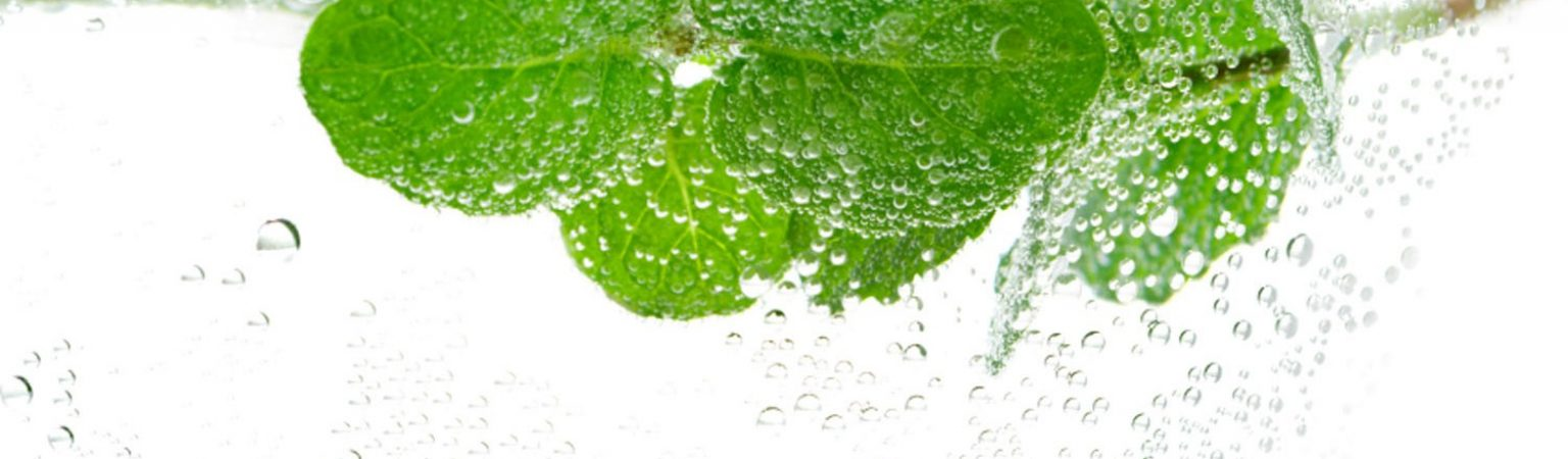 Fresh sprig of mint in water with bubbles
